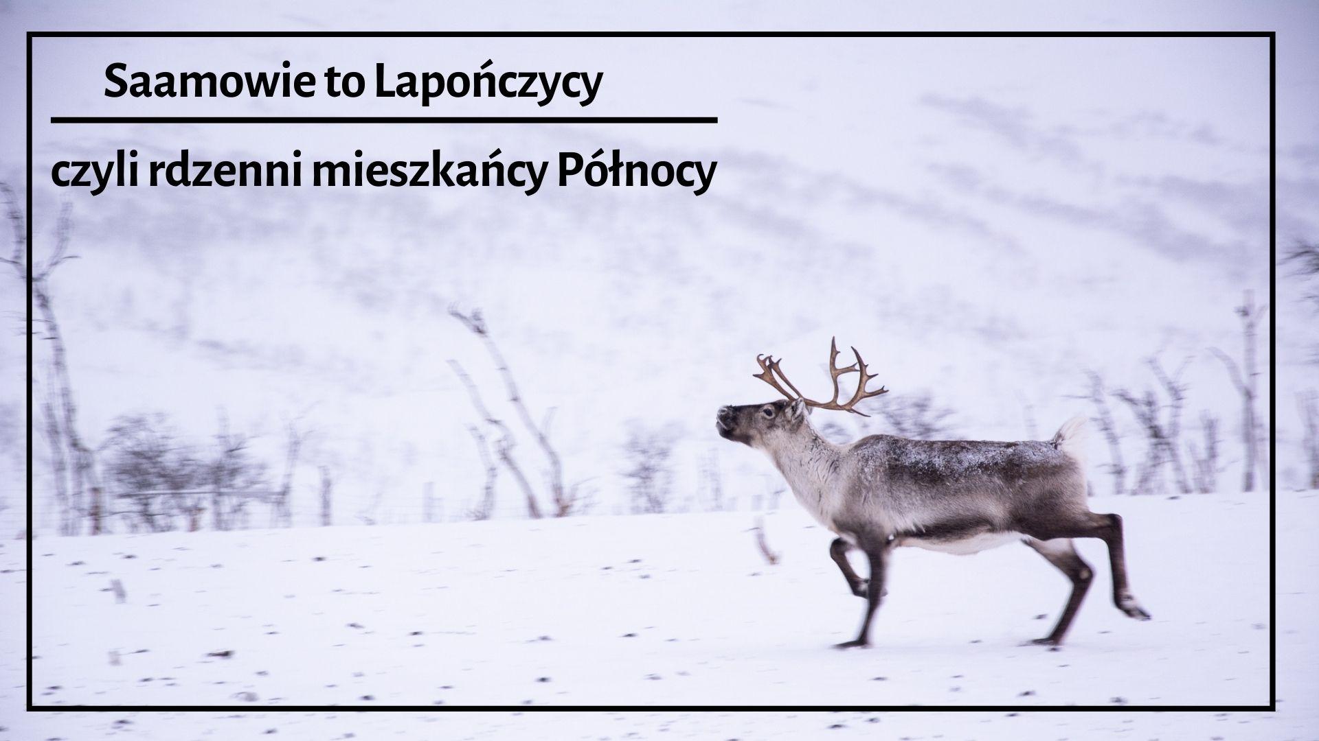 saamowie, lapończycy